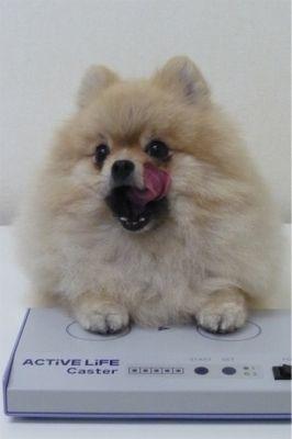 子犬と生命活性(波動)転写機ALC